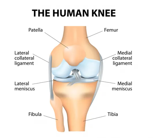 Shoulder, knee and arthroscopic surgeon in Pune